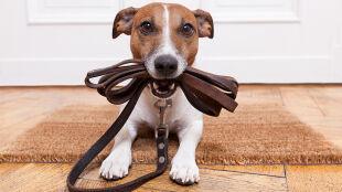Psy doskonale rozumieją to, co do nich mówimy