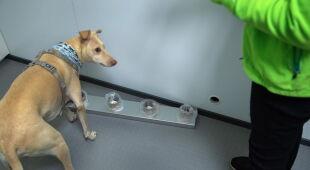 Na lotnisku w Helsinkach psy będą tropić chorych na COVID-19 (PAP/EPA/MAURI RATILAINEN)
