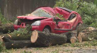 Wiatr w Szczecinie wyrwał drzewo z korzeniami, to upadło na samochód